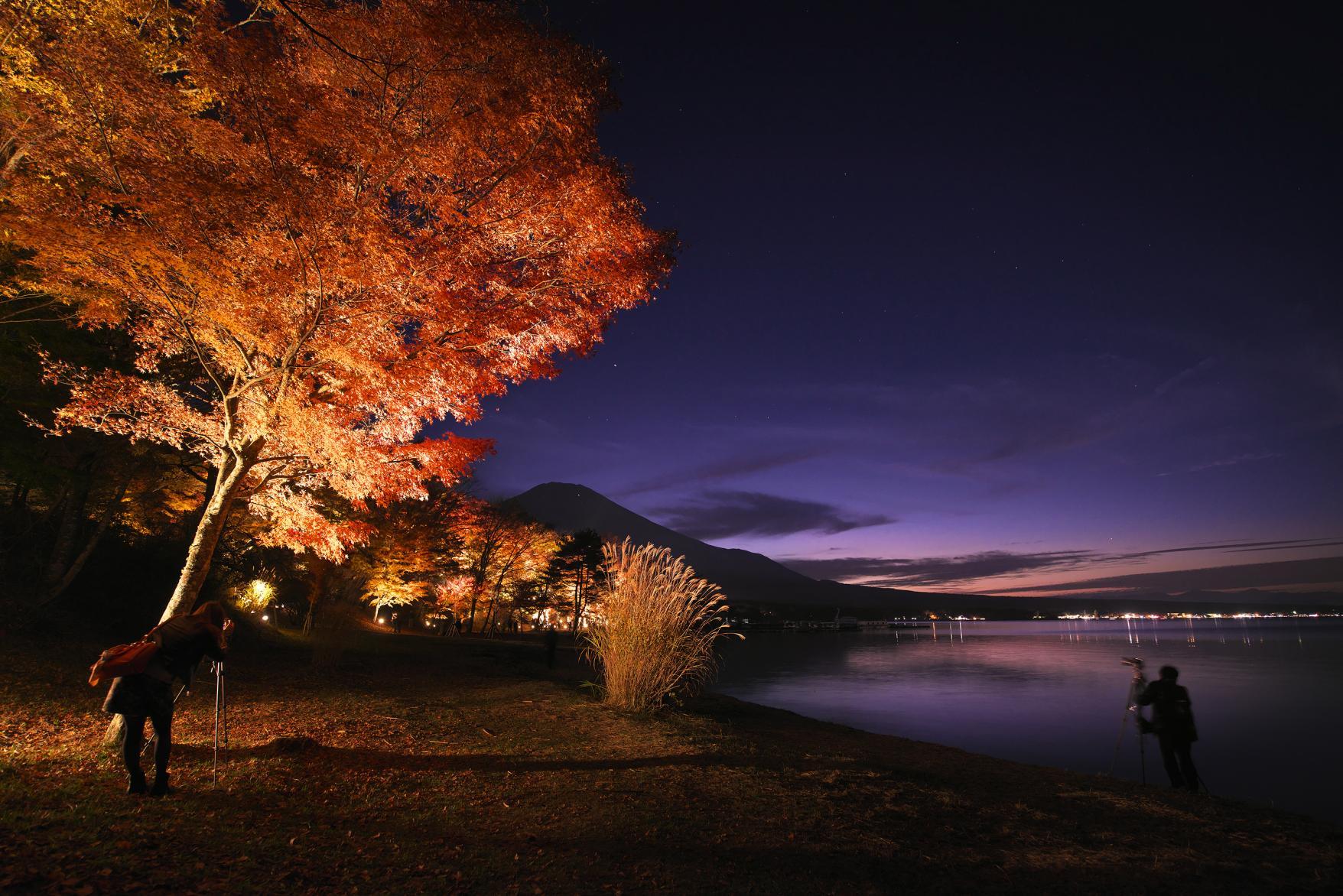 幻想的なライトアップも!山中湖の紅葉スポット