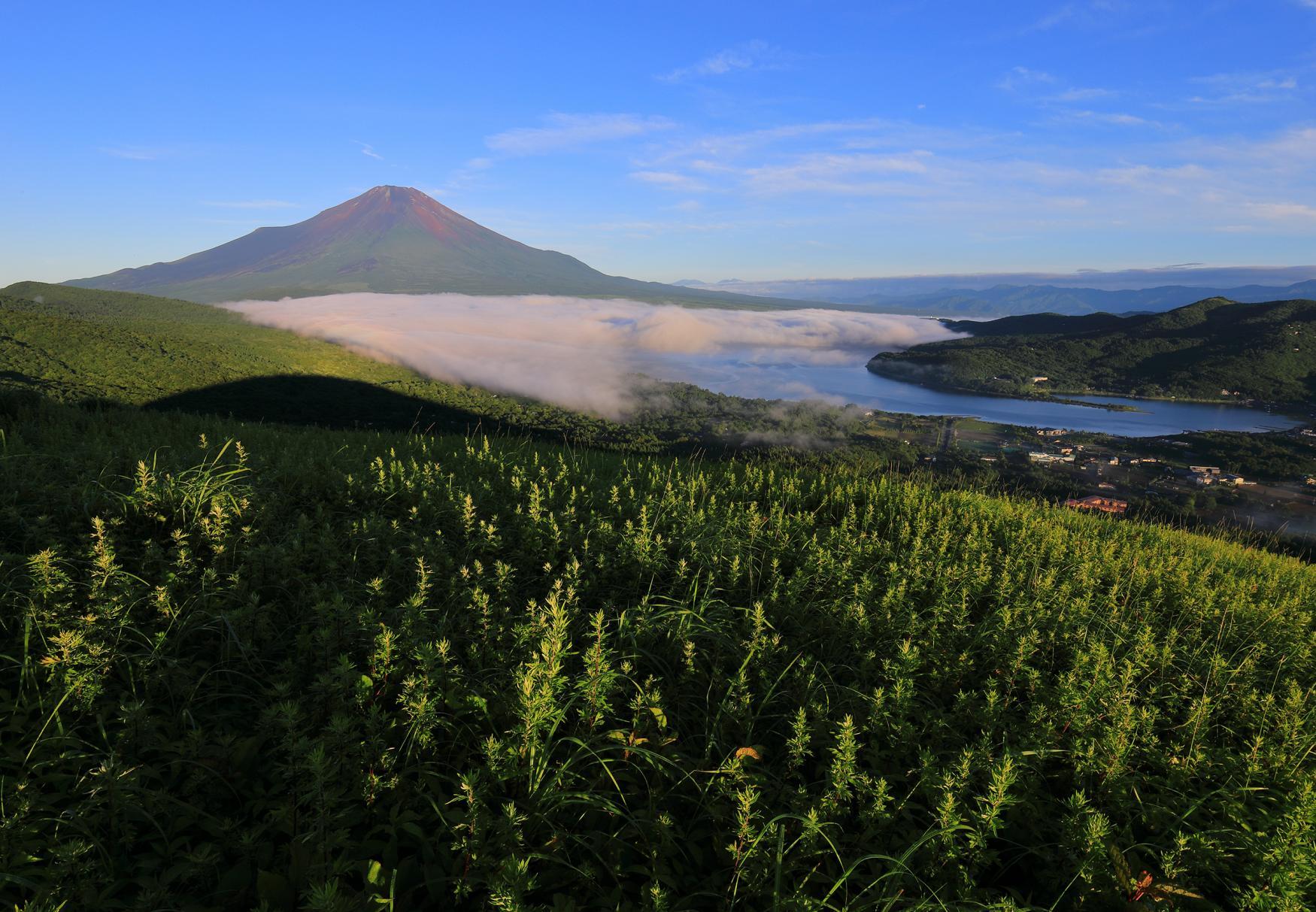 Mt. Fuji Viewing
