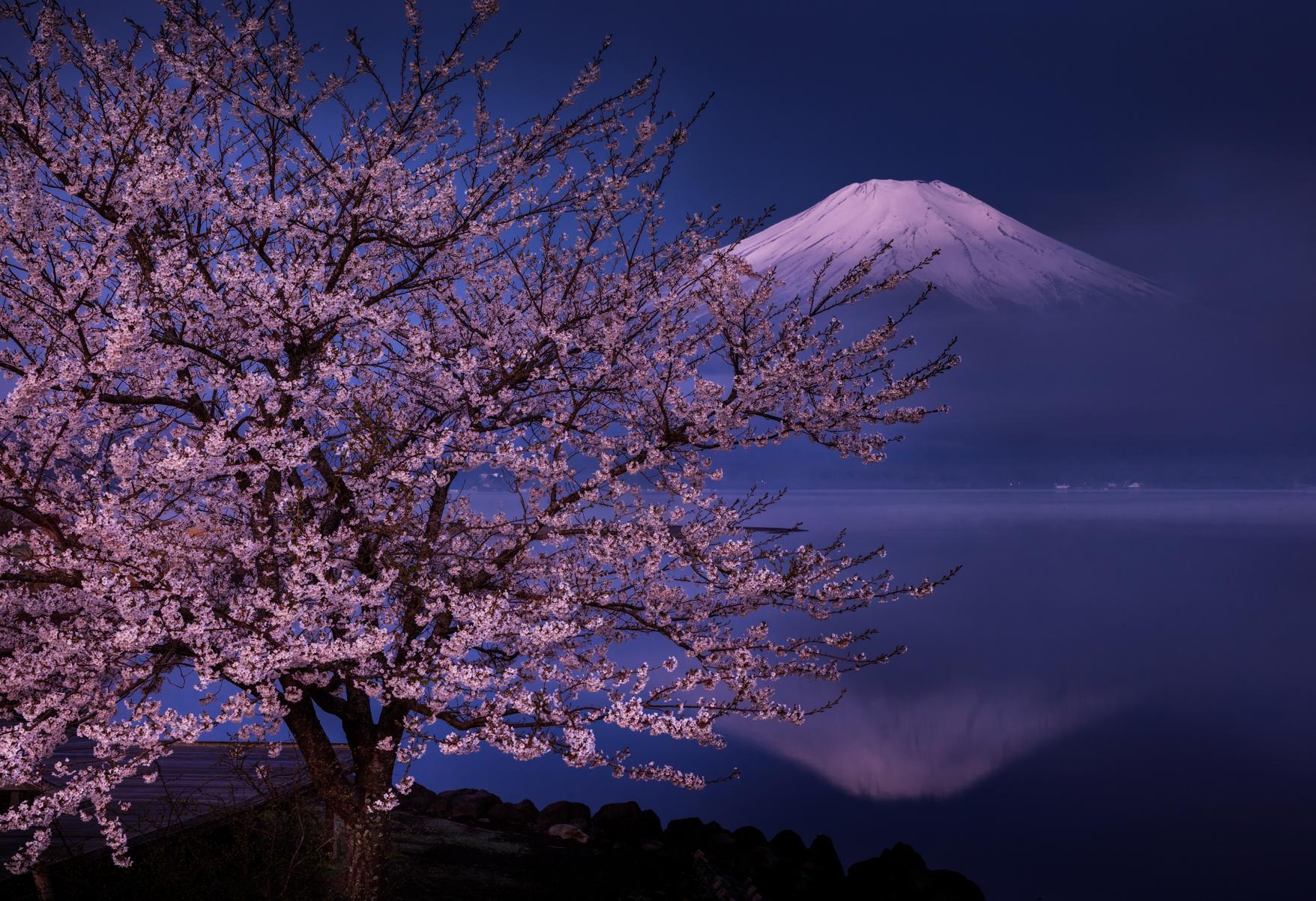 Famous cherry blossom spot