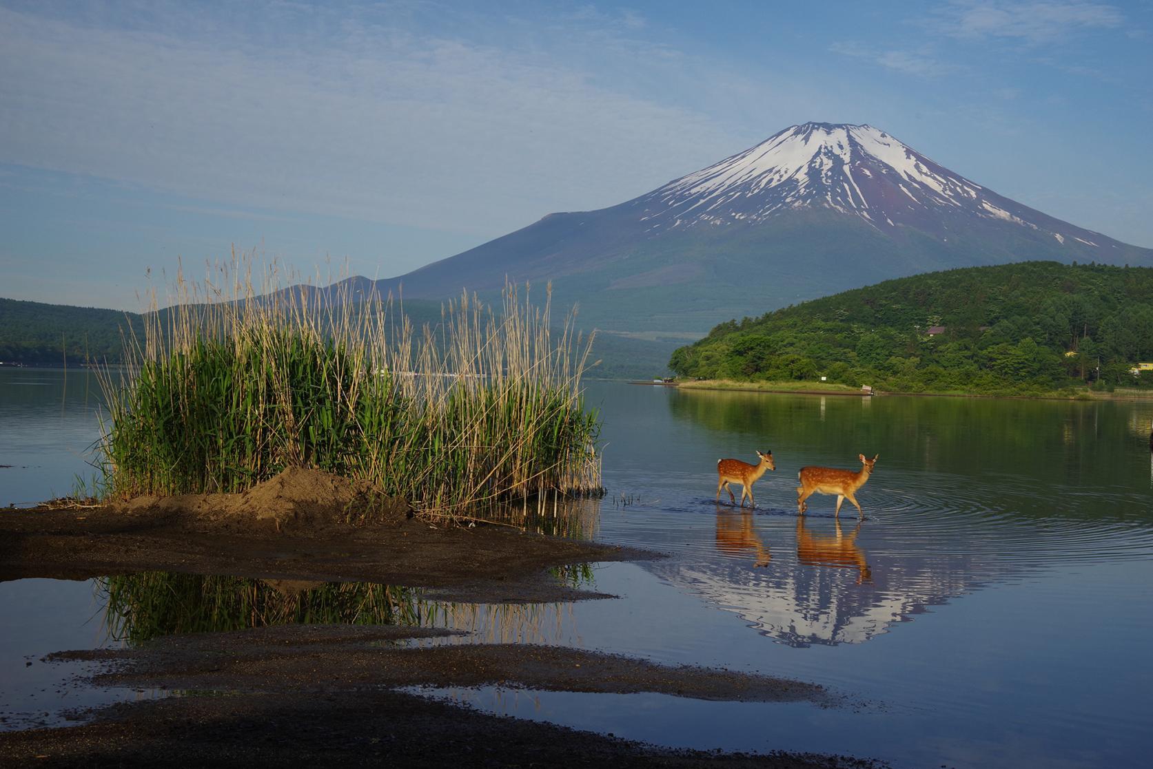 第14回山中湖フォトグランプリ受賞作品公開中-1