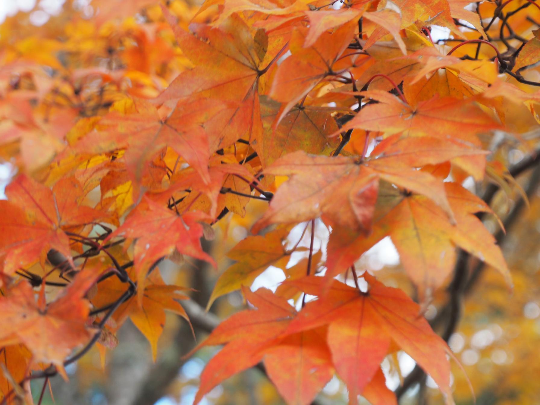 夕焼けの渚 紅葉まつり-1