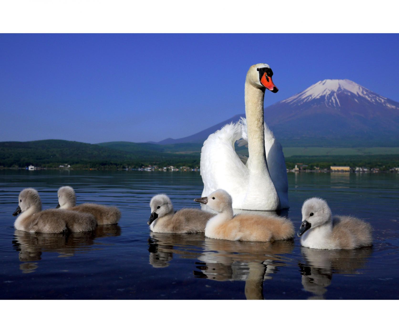 湖と富士山が織りなす四季折々の絶景-4