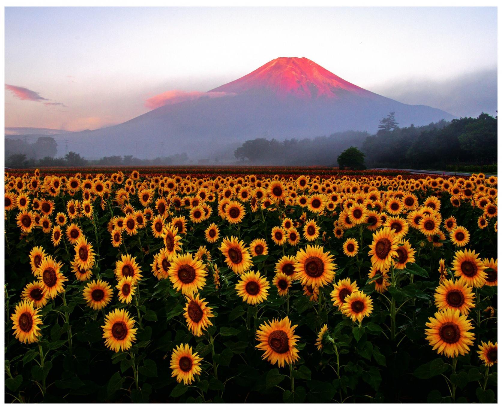 湖と富士山が織りなす四季折々の絶景-1