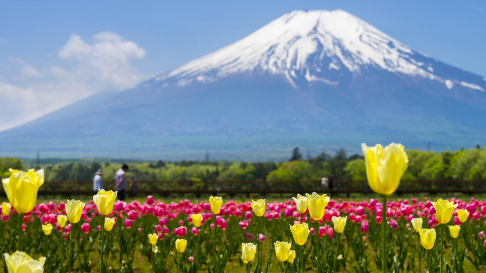 湖と富士山が織りなす四季折々の絶景-0