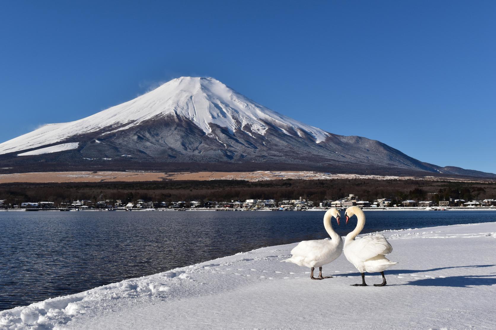 湖と富士山が織りなす四季折々の絶景-3
