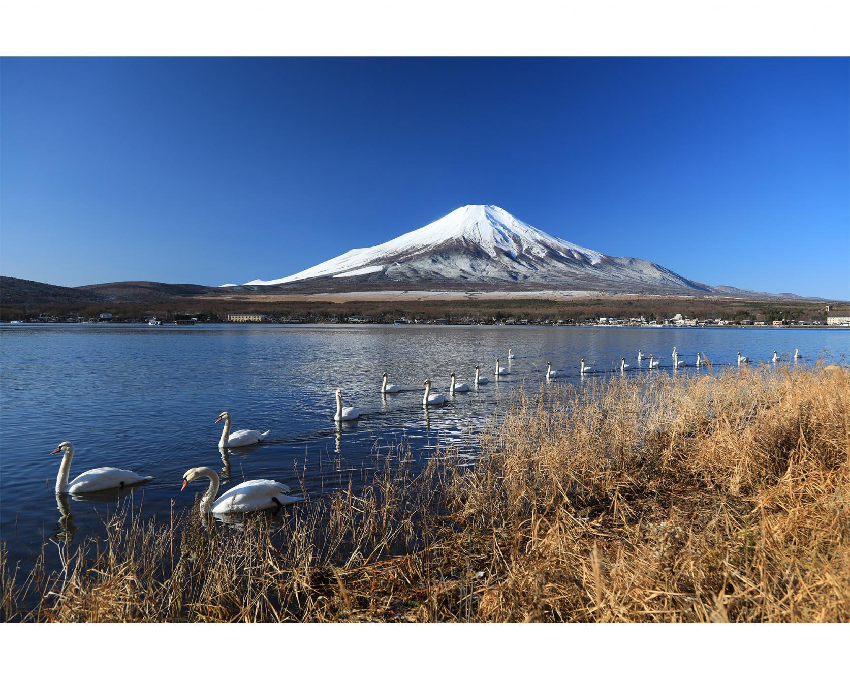 山中湖村長賞-0