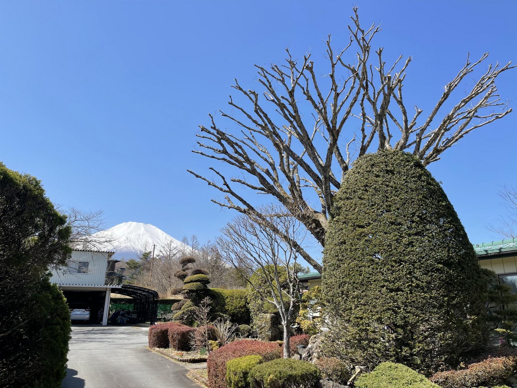 富士山と庭園-0