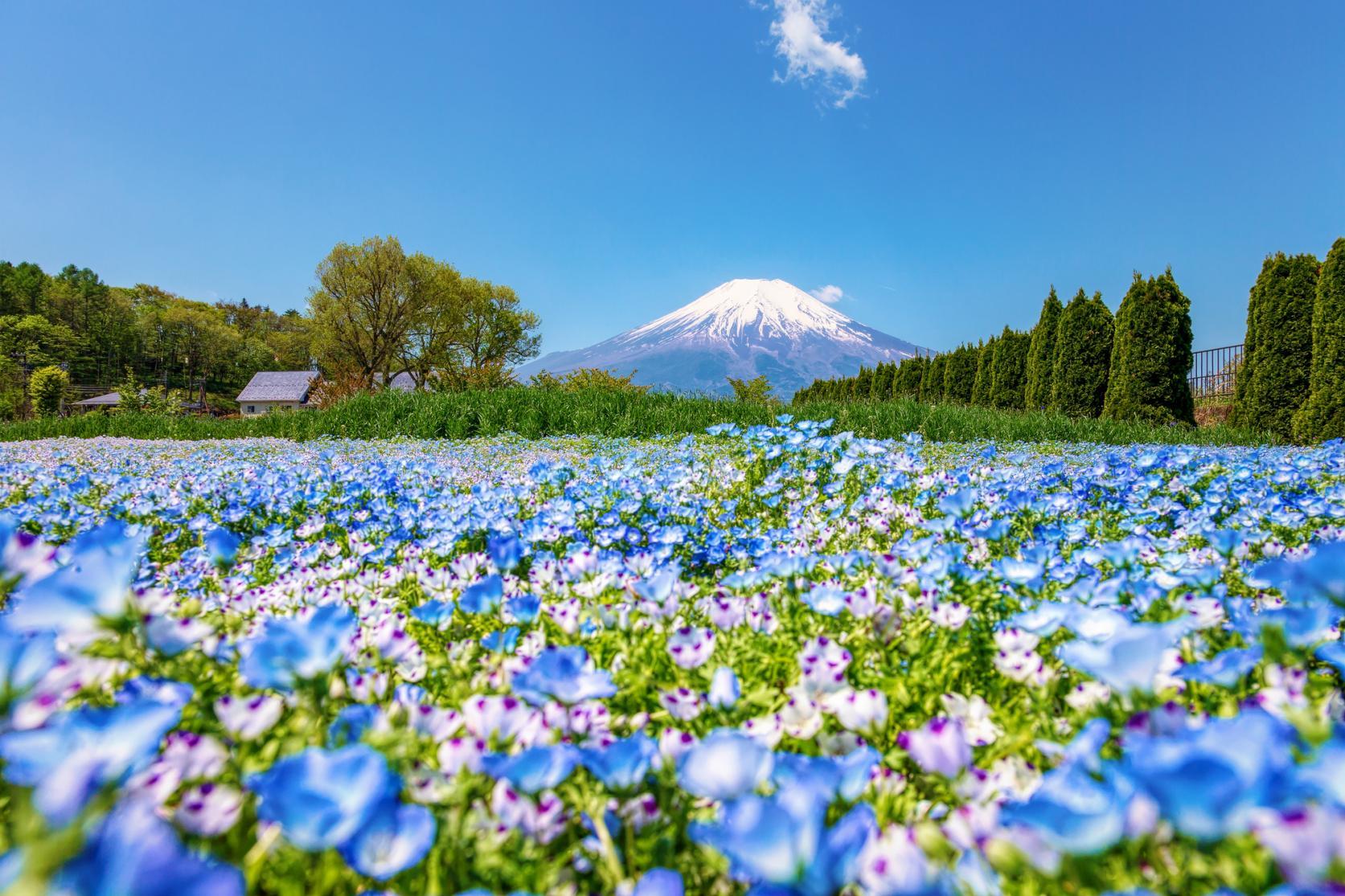 山中湖 花の都公園-9