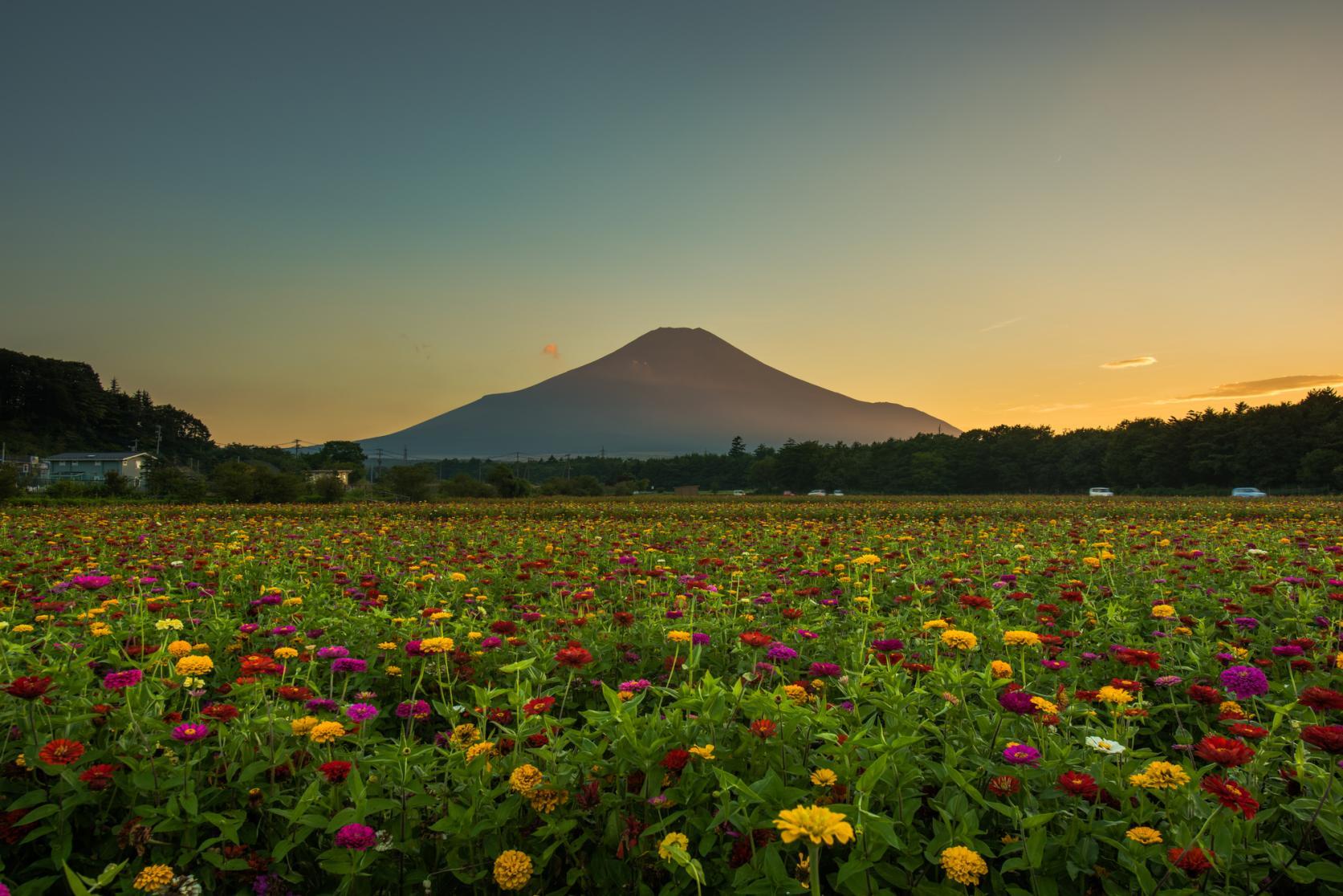 山中湖 花の都公園-8
