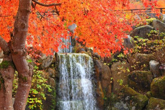 山中湖 花の都公園-6