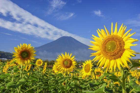 山中湖 花の都公園-0