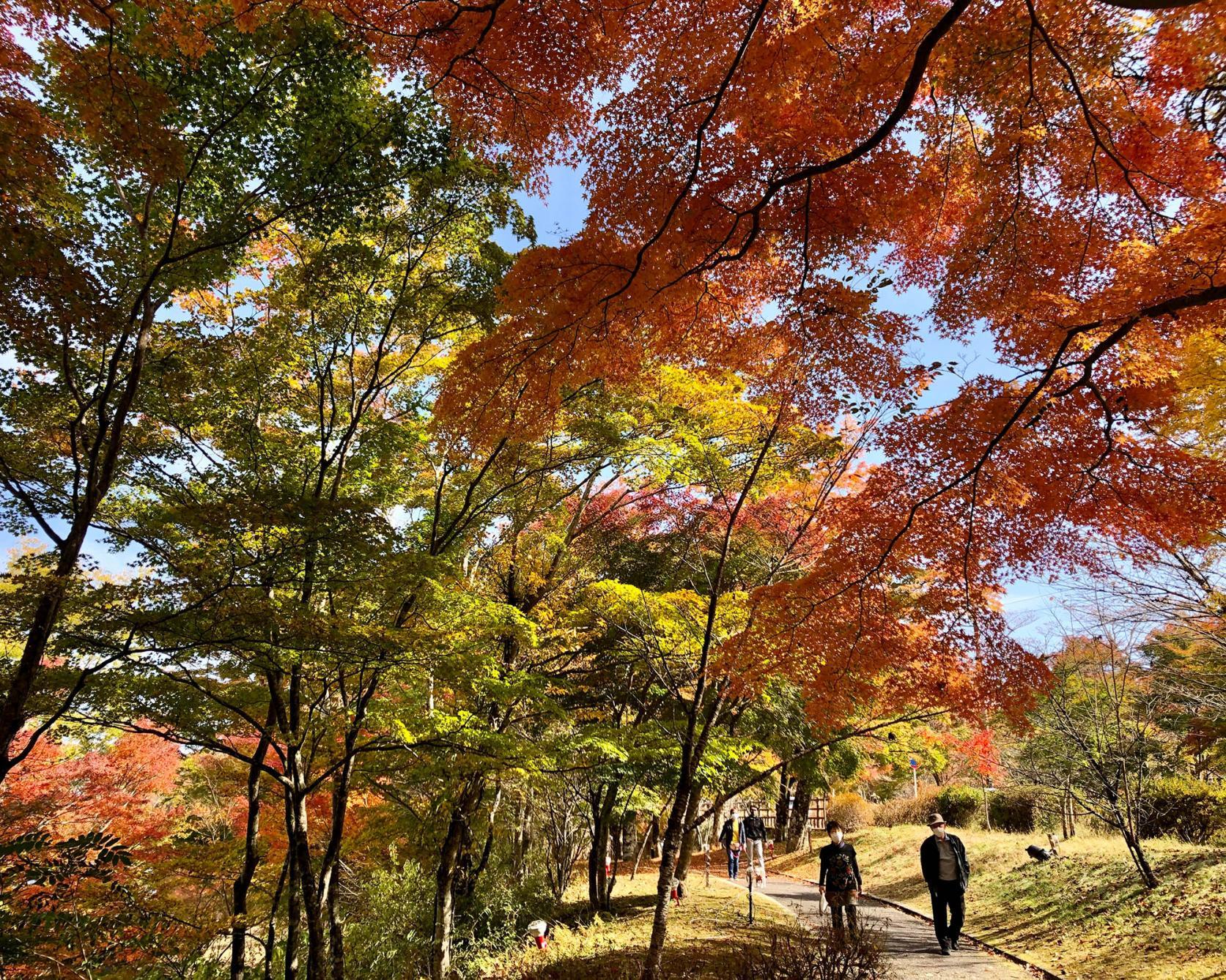 Asahigaoka lakeside Parkland-3