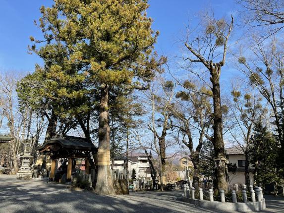 Yamanaka Suwa Jinja (Shrine)-2