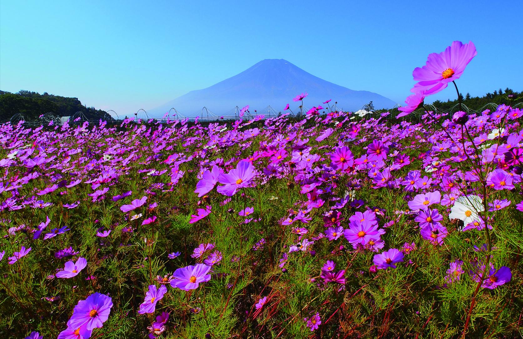 We will Take You to the Best Viewing Points to Photograph Mt. Fuji.-1
