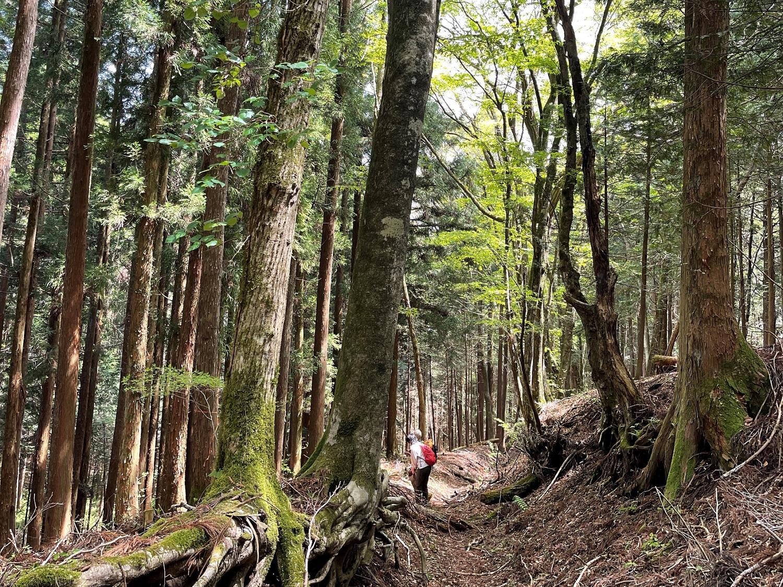 のんびり大平山ハイキング-3