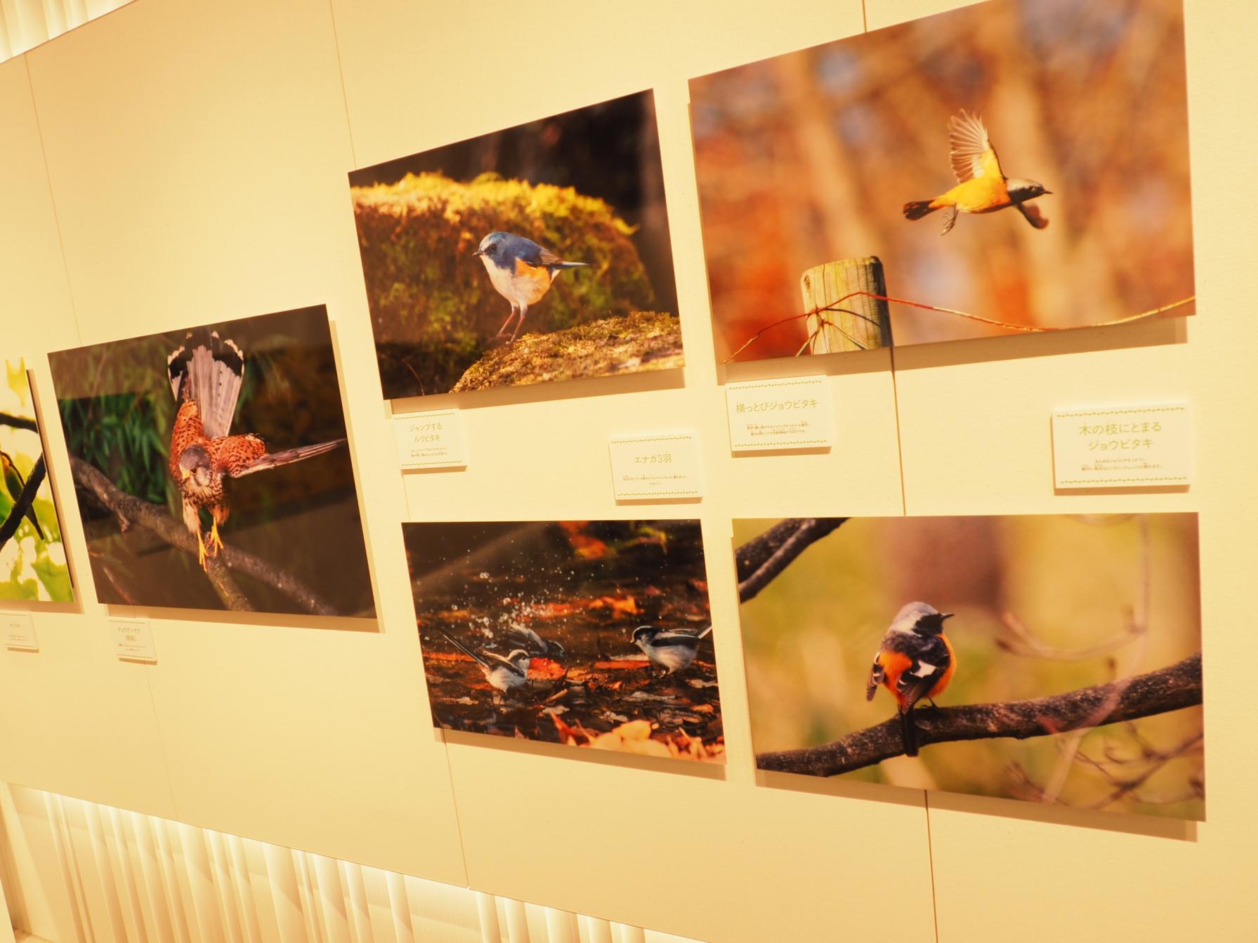 第14回山中湖フォトグランプリ写真展-2